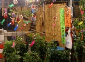 20060711ほおずき市1.jpg