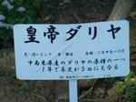 20071205KouteiDariya.JPG